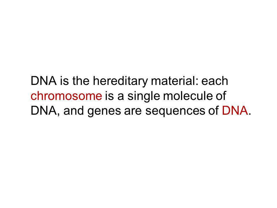 DNA is the hereditary material: each chromosome is a single molecule of DNA, and genes are sequences of DNA.