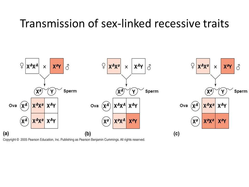 Transmission of sex-linked recessive traits