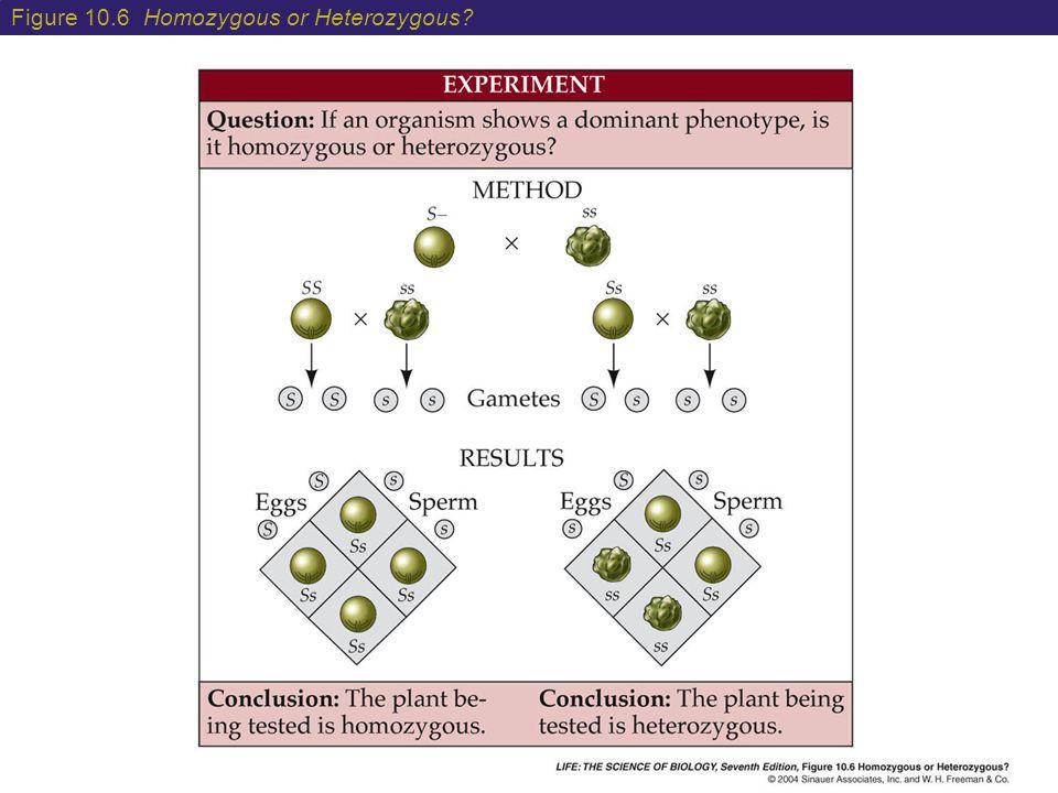 Figure 10.6 Homozygous or Heterozygous