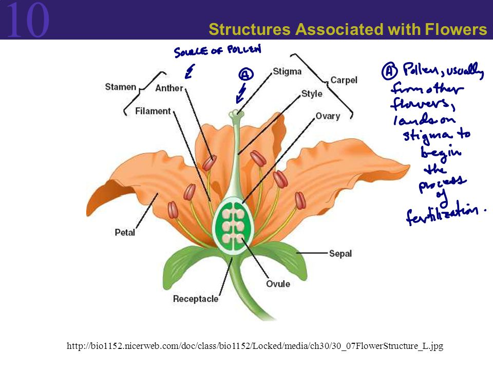 Structures Associated with Flowers