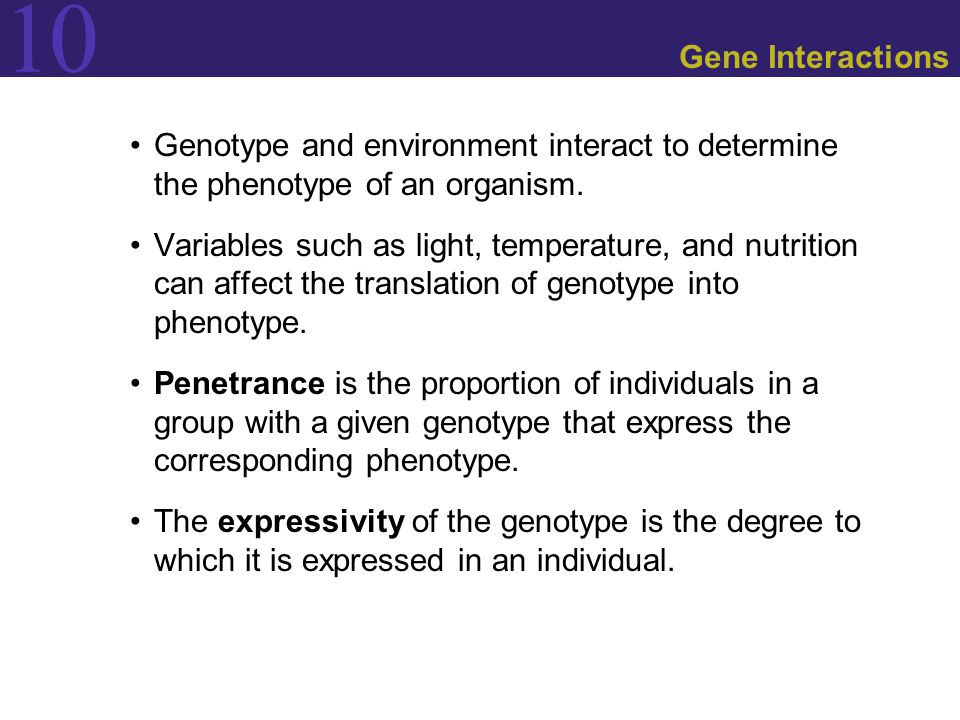 Gene Interactions Genotype and environment interact to determine the phenotype of an organism.