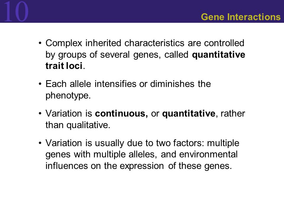 Gene Interactions Complex inherited characteristics are controlled by groups of several genes, called quantitative trait loci.