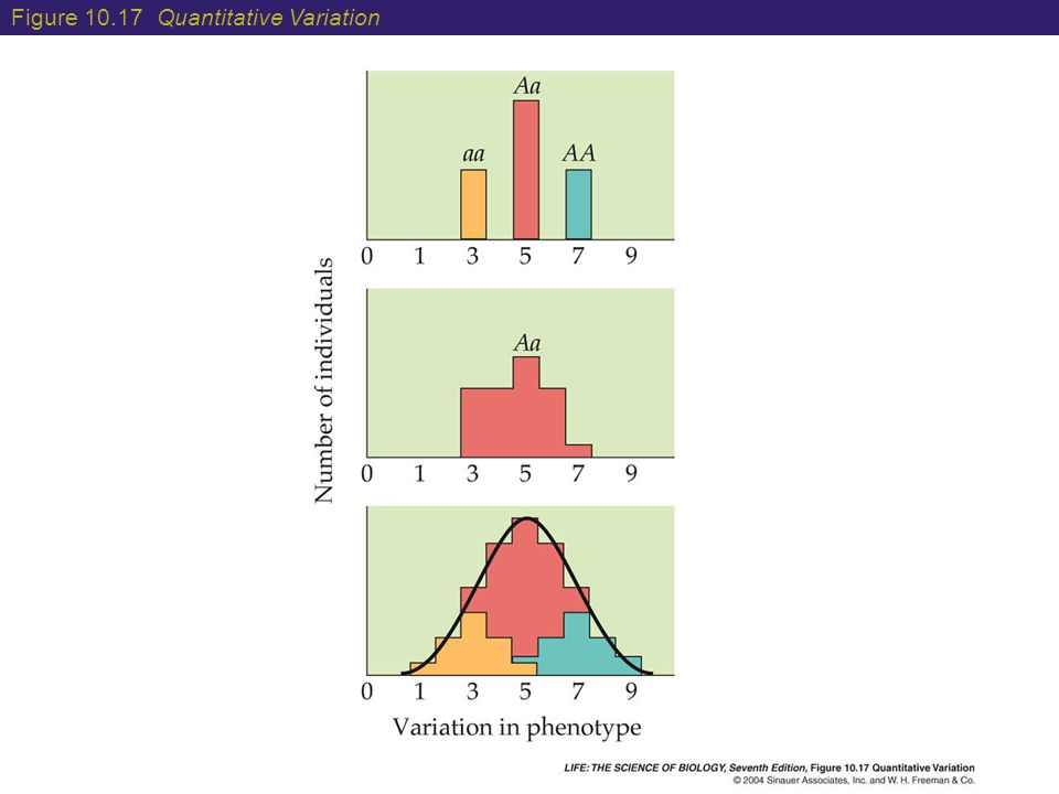 Figure 10.17 Quantitative Variation