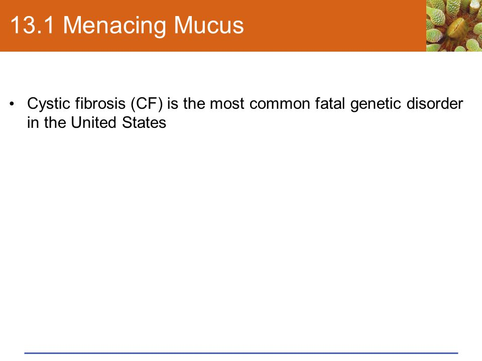 13.1 Menacing Mucus Cystic fibrosis (CF) is the most common fatal genetic disorder in the United States.