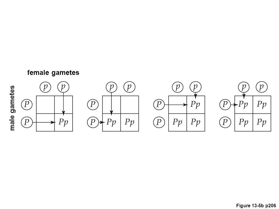 female gametes male gametes