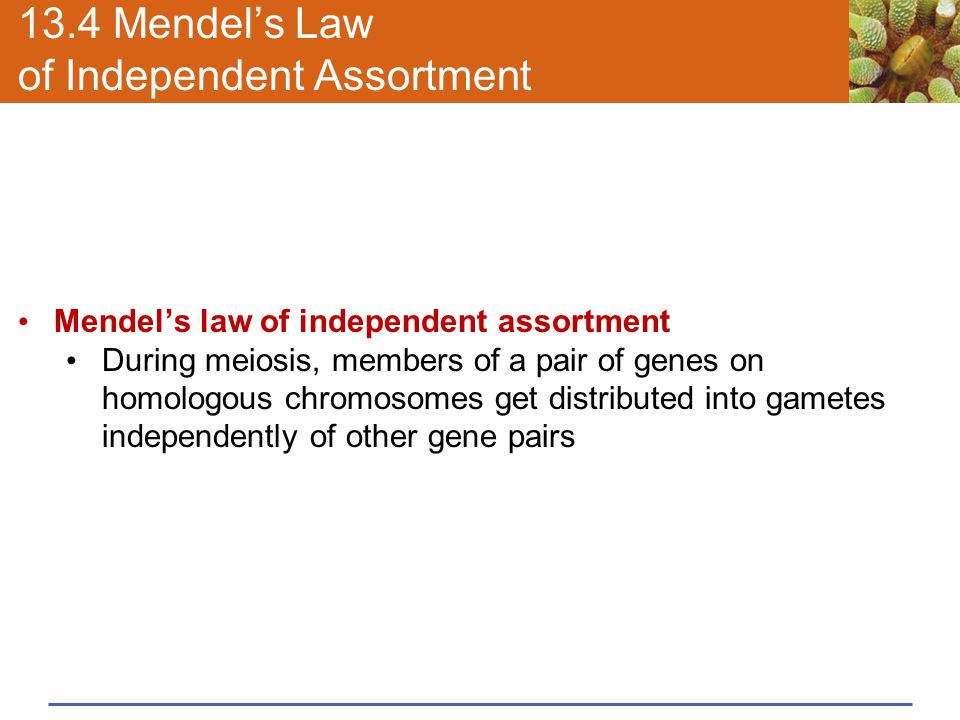 13.4 Mendel's Law of Independent Assortment