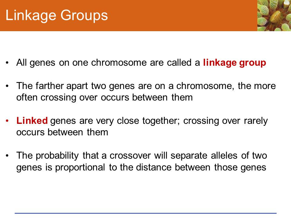 Linkage Groups All genes on one chromosome are called a linkage group