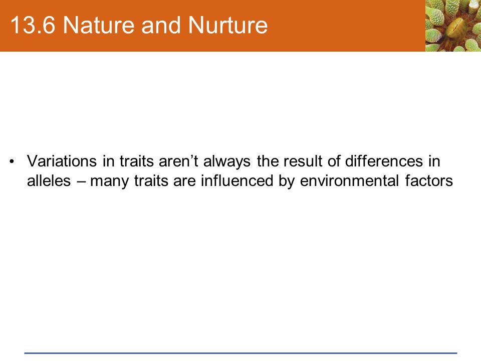 13.6 Nature and Nurture Variations in traits aren't always the result of differences in alleles – many traits are influenced by environmental factors.