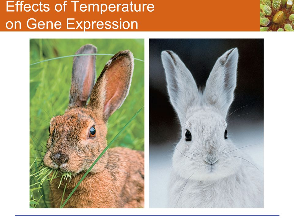 Effects of Temperature on Gene Expression