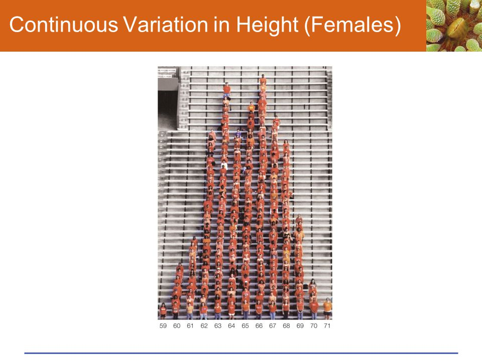 Continuous Variation in Height (Females)