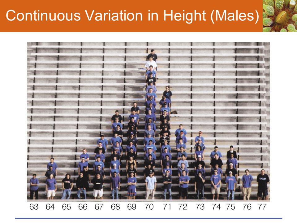 Continuous Variation in Height (Males)