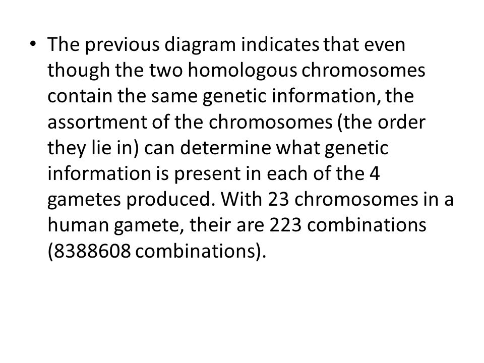 The previous diagram indicates that even though the two homologous chromosomes contain the same genetic information, the assortment of the chromosomes (the order they lie in) can determine what genetic information is present in each of the 4 gametes produced.