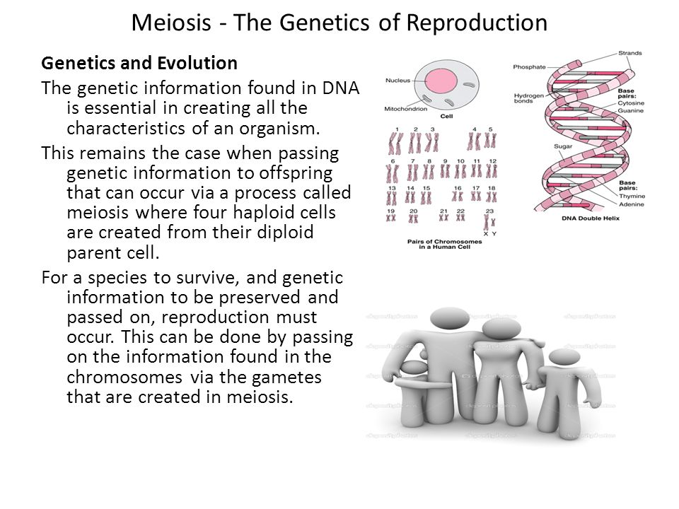 Meiosis - The Genetics of Reproduction