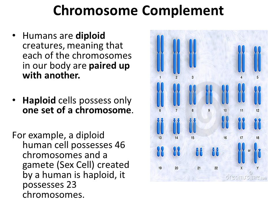 Chromosome Complement