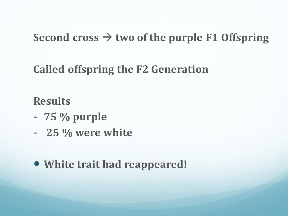 Second cross  two of the purple F1 Offspring