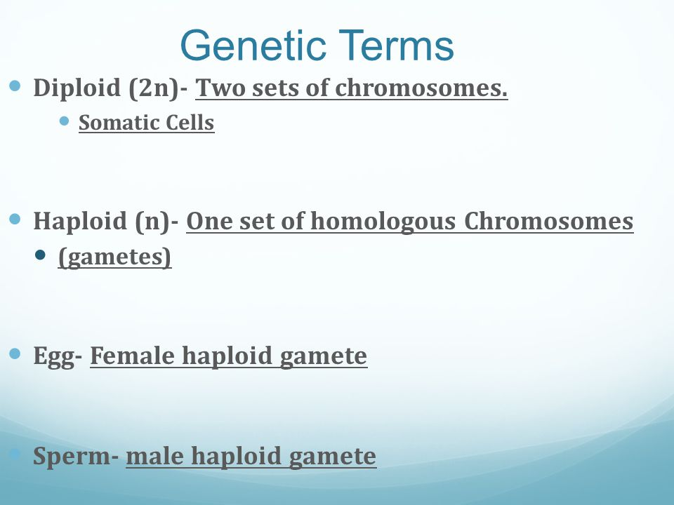 Genetic Terms Diploid (2n)- Two sets of chromosomes.