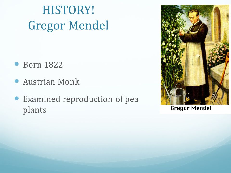 HISTORY! Gregor Mendel Born 1822 Austrian Monk