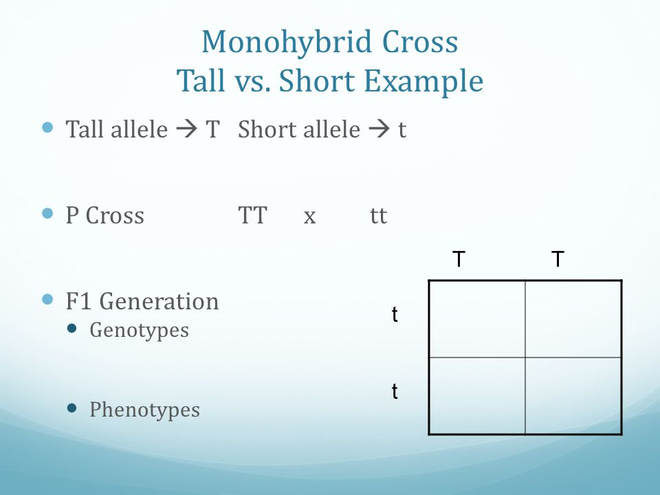Monohybrid Cross Tall vs. Short Example