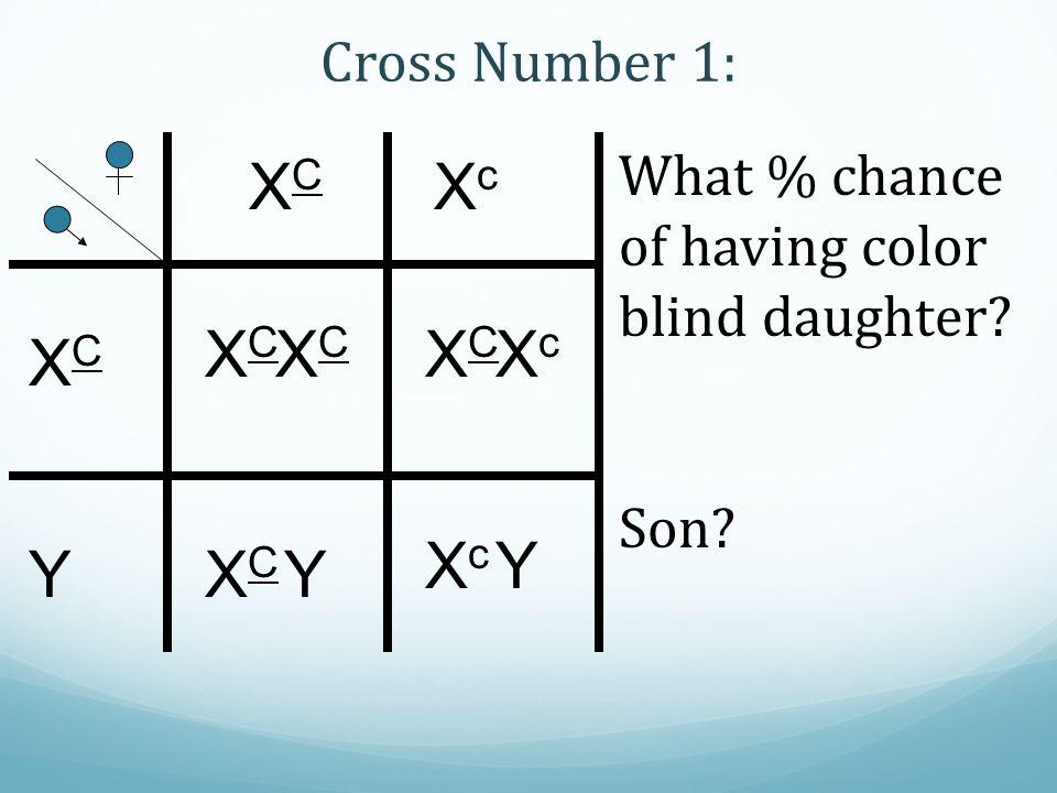 XC Xc XC XC Xc XC Xc Y Y XC Y Cross Number 1: