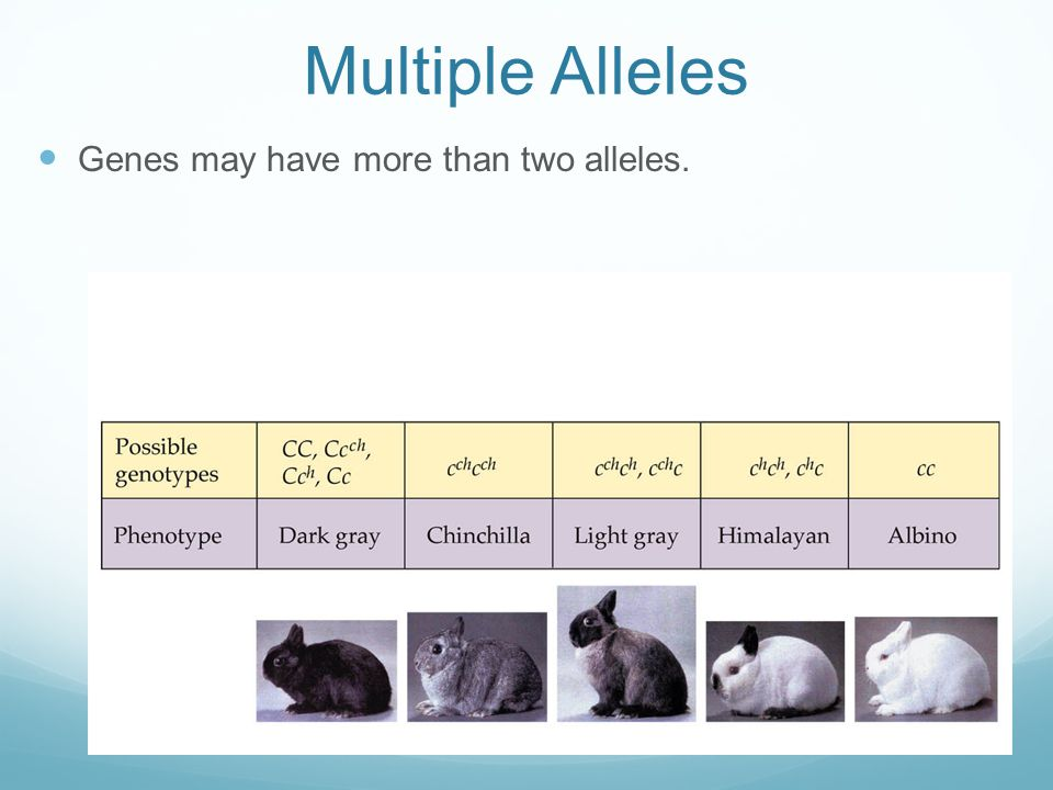 Multiple Alleles Genes may have more than two alleles.