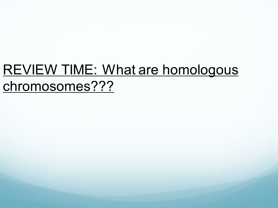 REVIEW TIME: What are homologous chromosomes