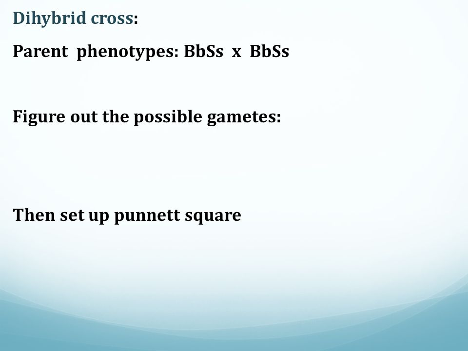 Dihybrid cross: Parent phenotypes: BbSs x BbSs.