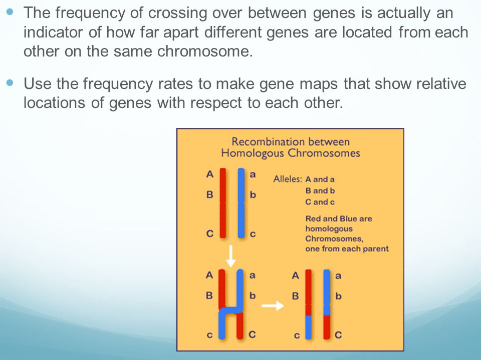 The frequency of crossing over between genes is actually an indicator of how far apart different genes are located from each other on the same chromosome.