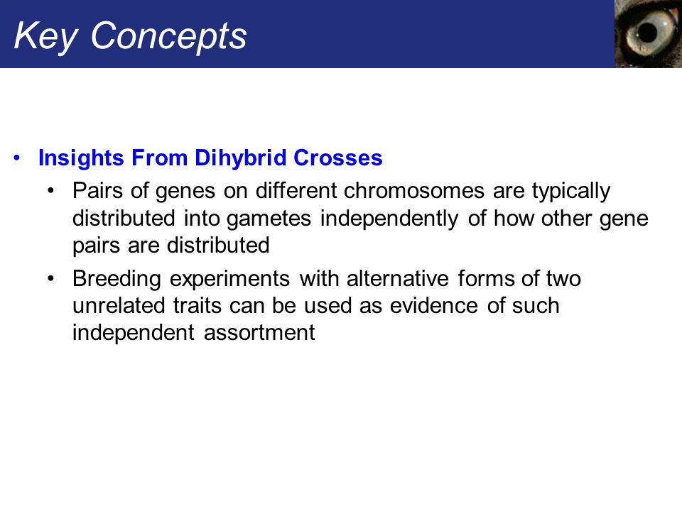 Key Concepts Insights From Dihybrid Crosses