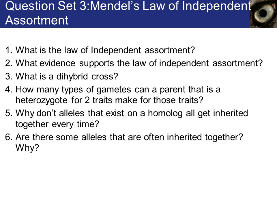 Question Set 3:Mendel's Law of Independent Assortment