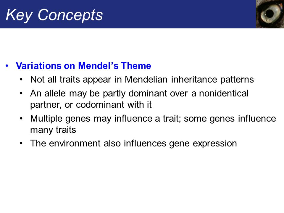 Key Concepts Variations on Mendel's Theme