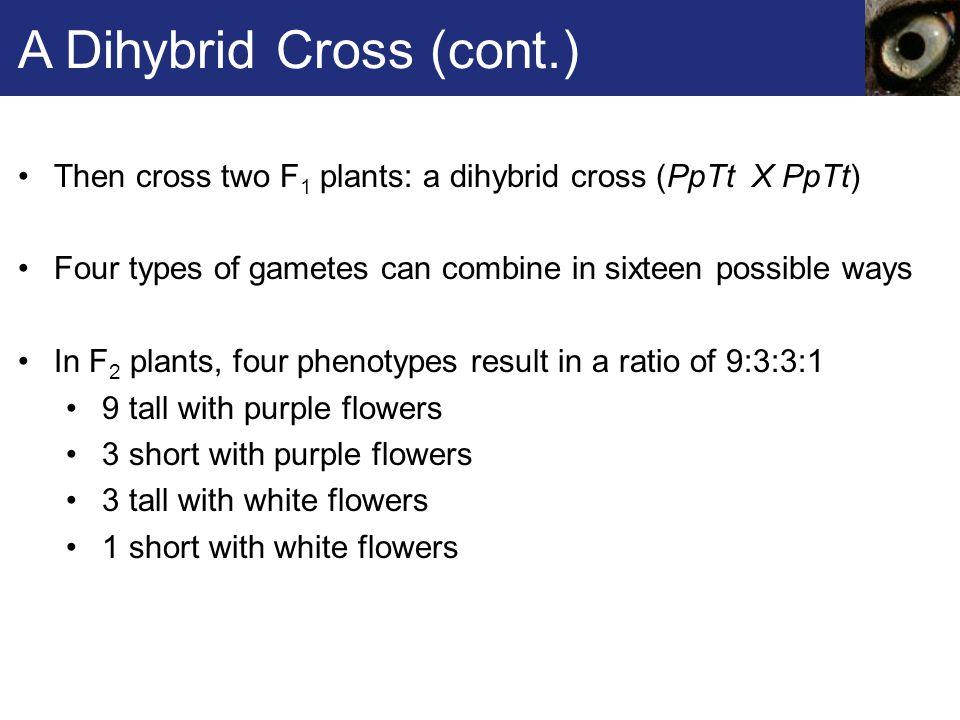 A Dihybrid Cross (cont.)
