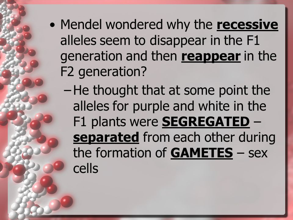 Mendel wondered why the recessive alleles seem to disappear in the F1 generation and then reappear in the F2 generation