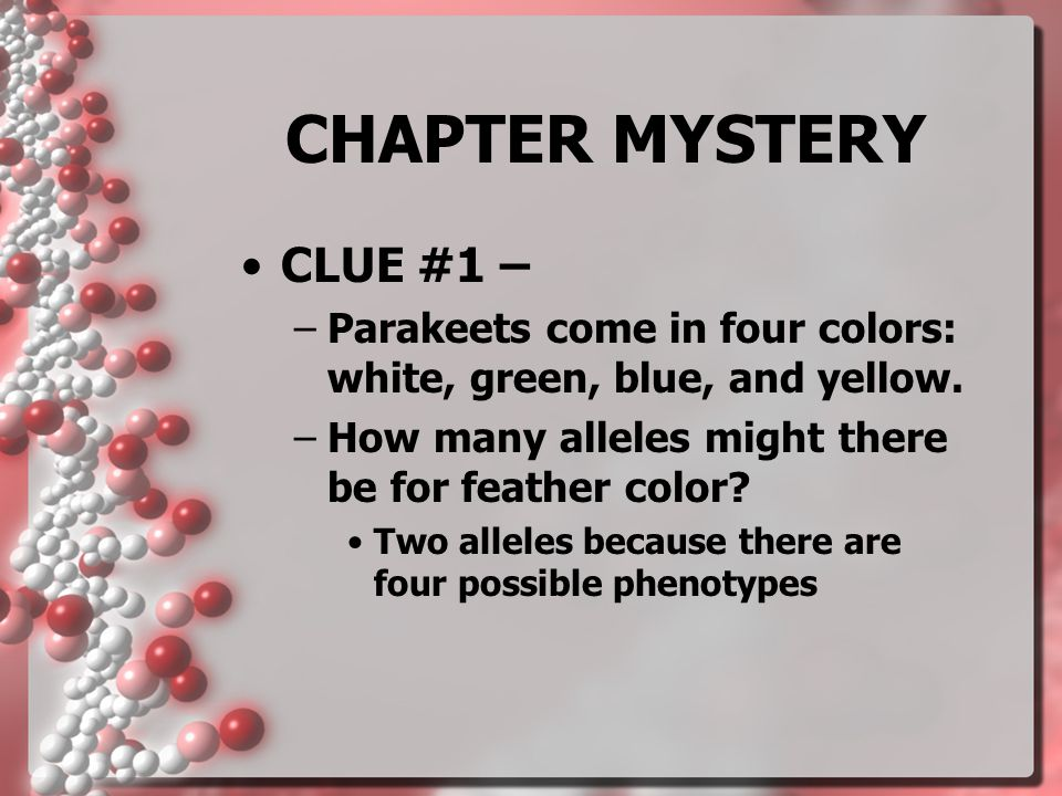 CHAPTER MYSTERY CLUE #1 –