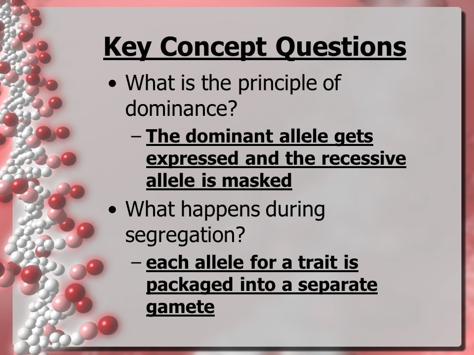 Key Concept Questions What is the principle of dominance