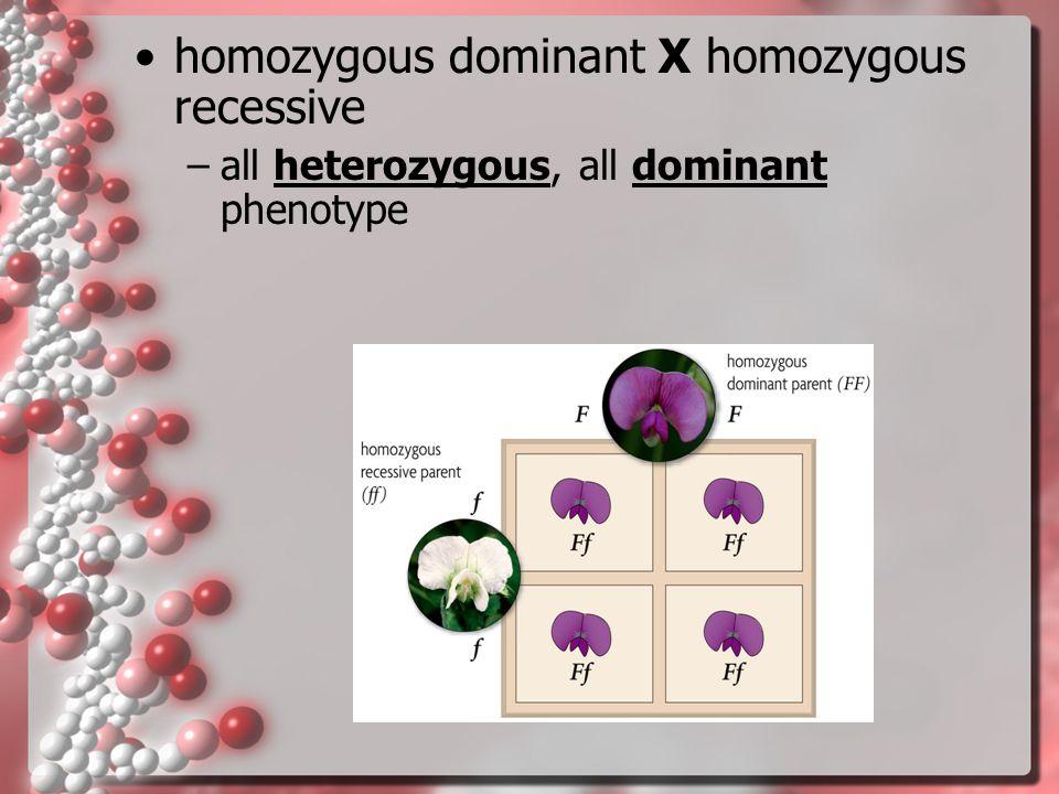 homozygous dominant X homozygous recessive