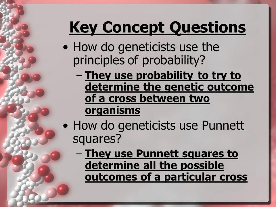 Key Concept Questions How do geneticists use the principles of probability