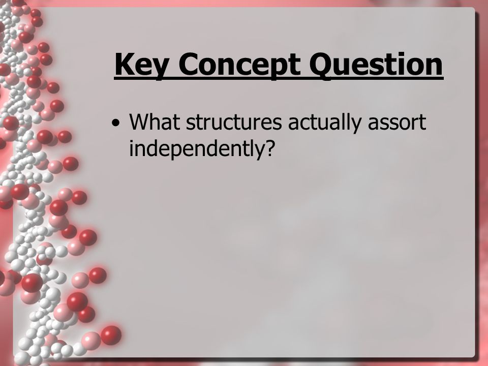 Key Concept Question What structures actually assort independently