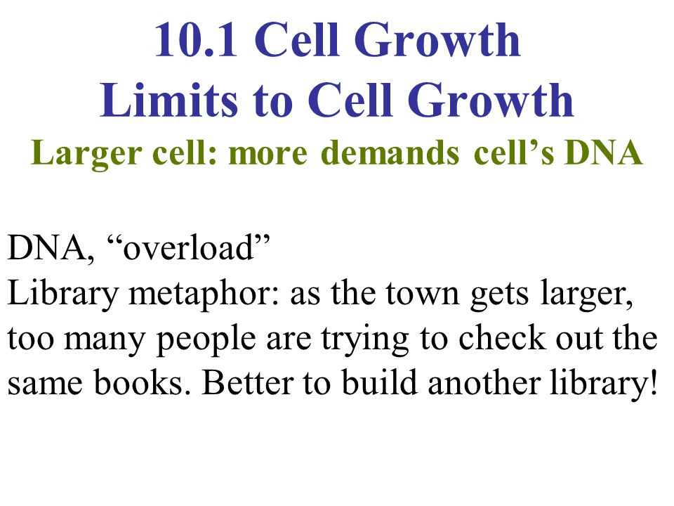 10.1 Cell Growth Limits to Cell Growth Larger cell: more demands cell's DNA