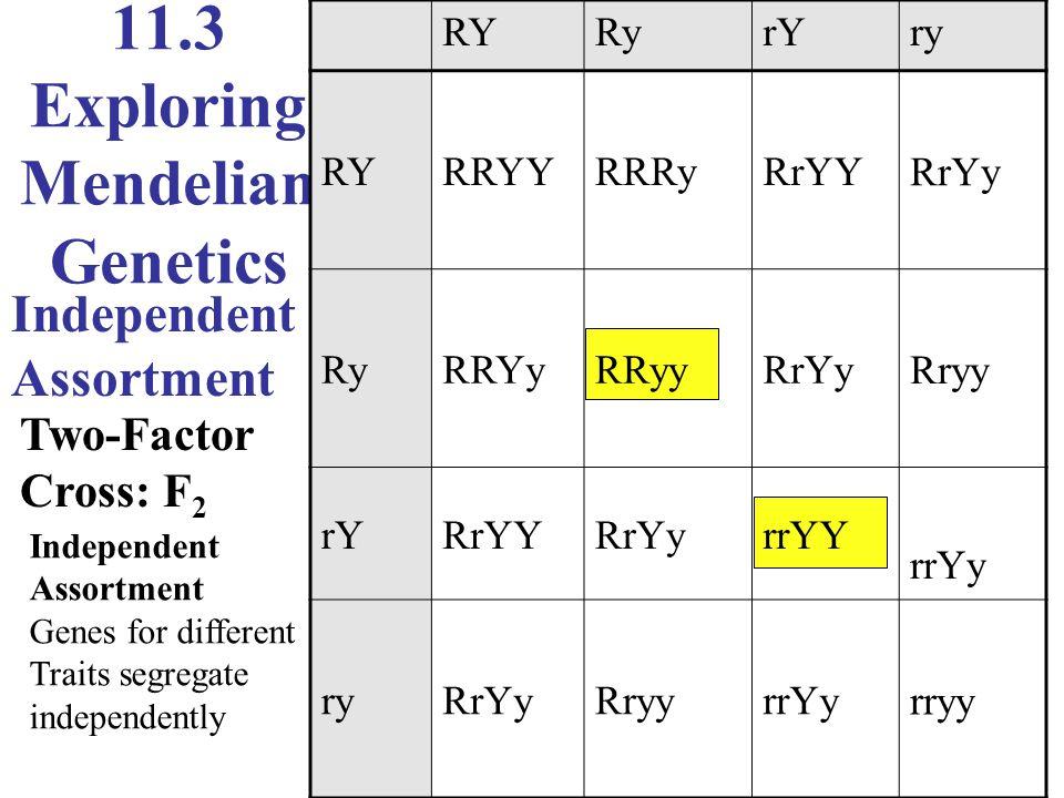 11.3 Exploring Mendelian Genetics