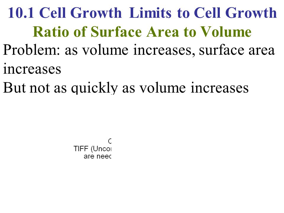10.1 Cell Growth Limits to Cell Growth Ratio of Surface Area to Volume