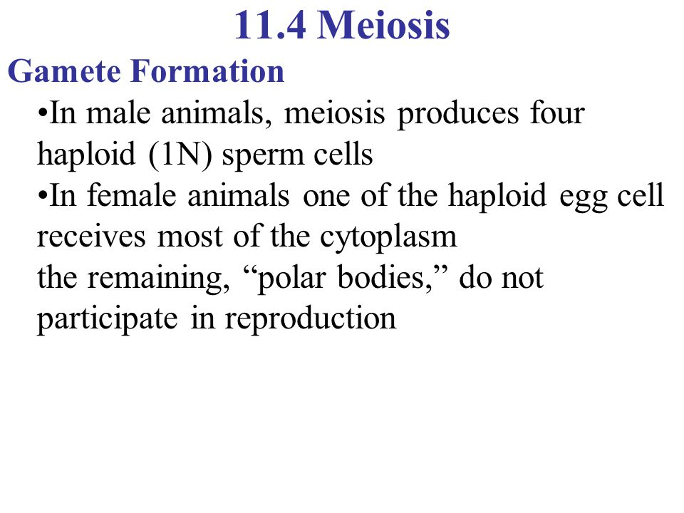 11.4 Meiosis Gamete Formation