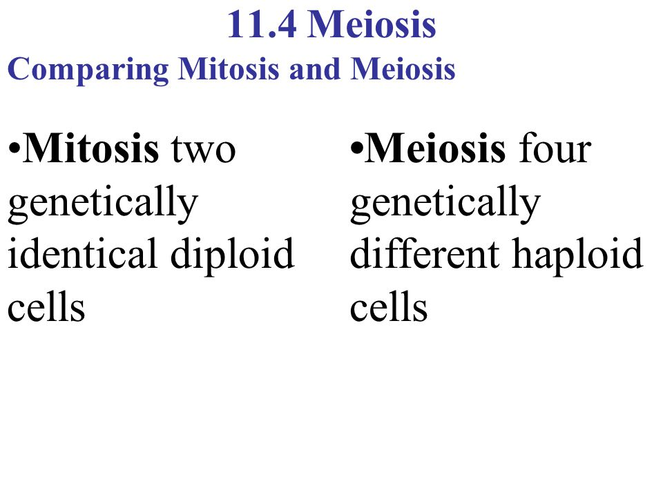 •Mitosis two genetically identical diploid cells