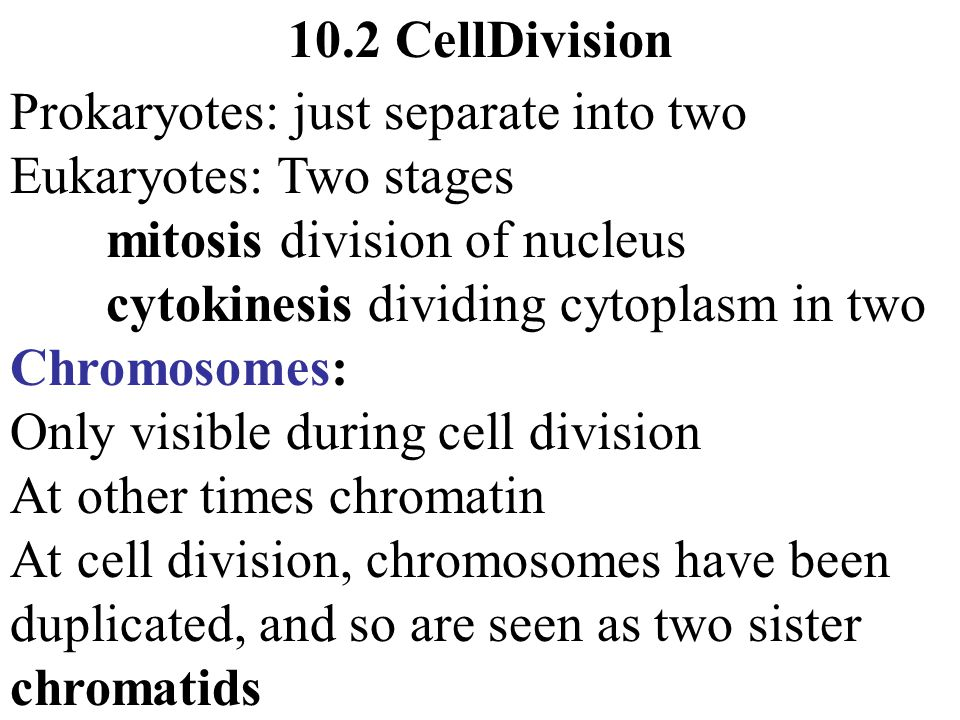 10.2 CellDivision Prokaryotes: just separate into two. Eukaryotes: Two stages. mitosis division of nucleus.