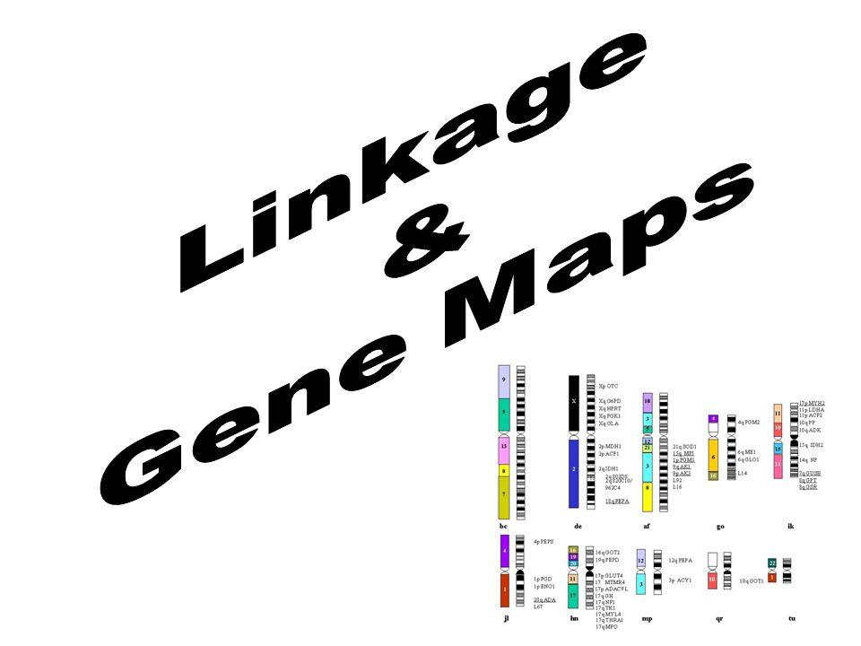 Linkage & Gene Maps
