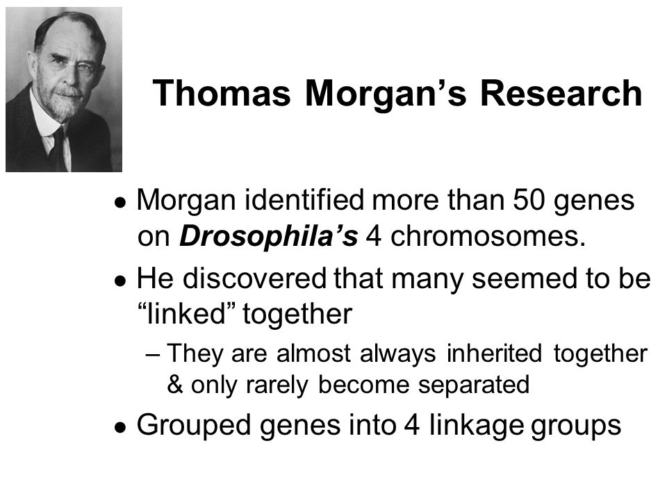 Thomas Morgan's Research