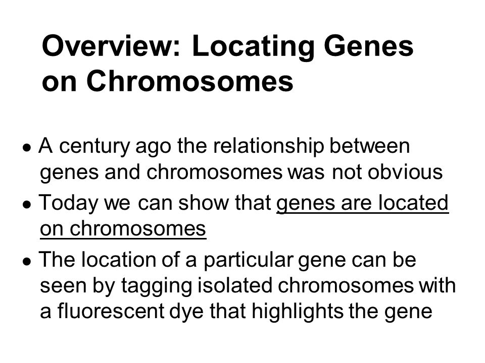 Overview: Locating Genes on Chromosomes