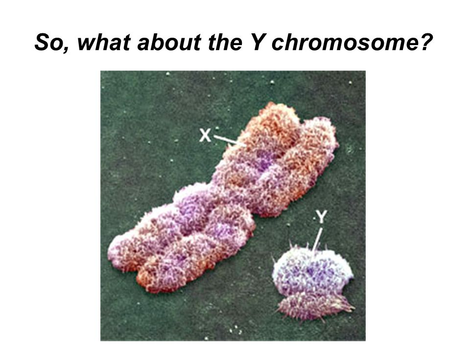 So, what about the Y chromosome