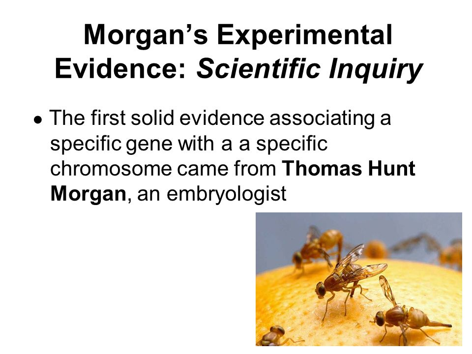 Morgan's Experimental Evidence: Scientific Inquiry