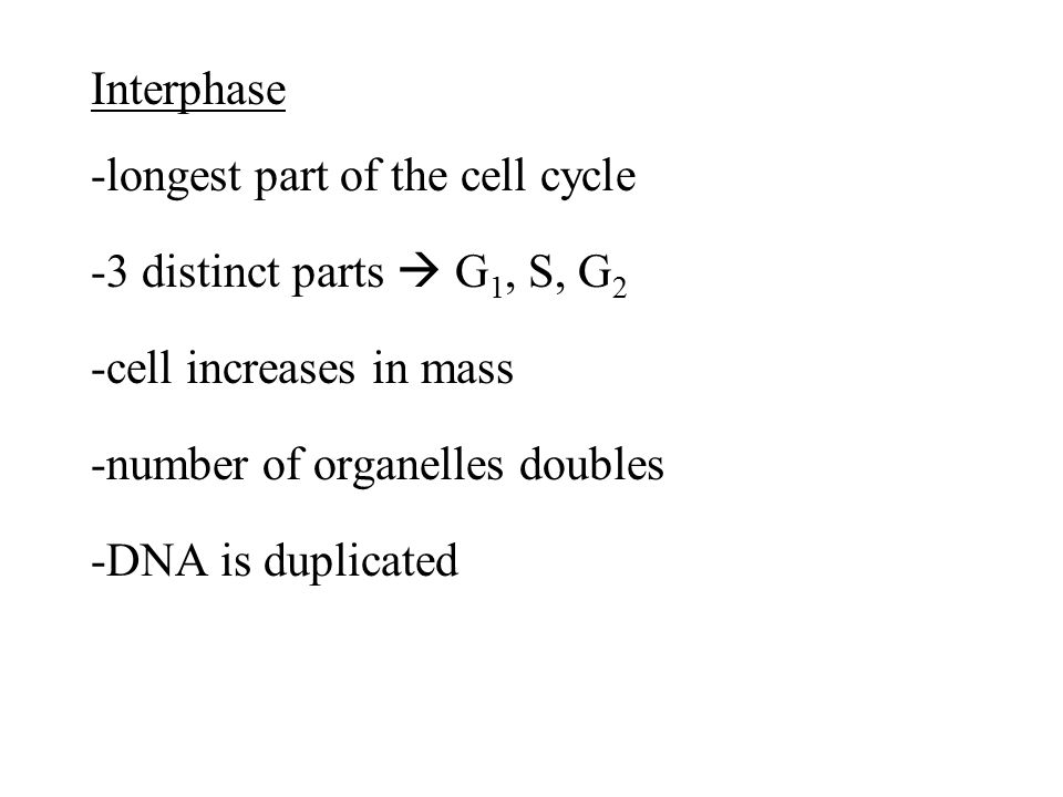 Interphase -longest part of the cell cycle -3 distinct parts  G1, S, G2 -cell increases in mass -number of organelles doubles -DNA is duplicated