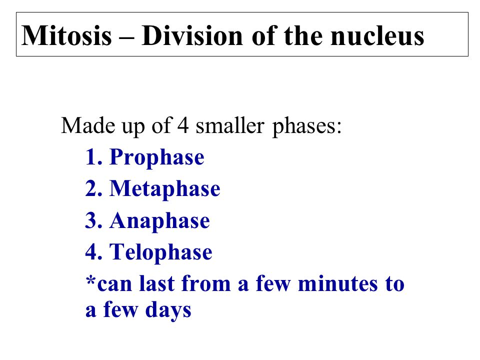 Mitosis – Division of the nucleus